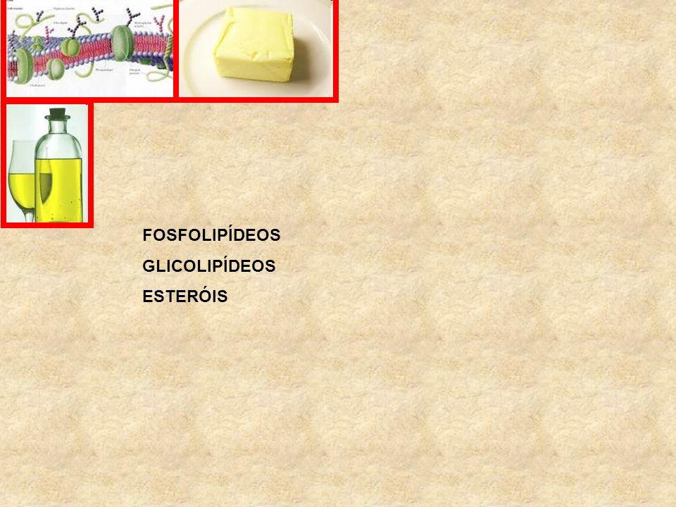 FOSFOLIPÍDEOS GLICOLIPÍDEOS ESTERÓIS FINGO