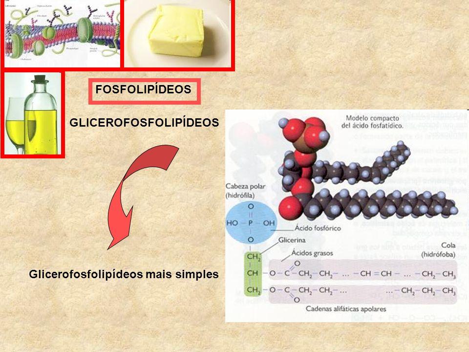 Glicerofosfolipídeos mais simples