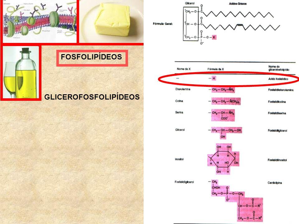 FOSFOLIPÍDEOS GLICEROFOSFOLIPÍDEOS