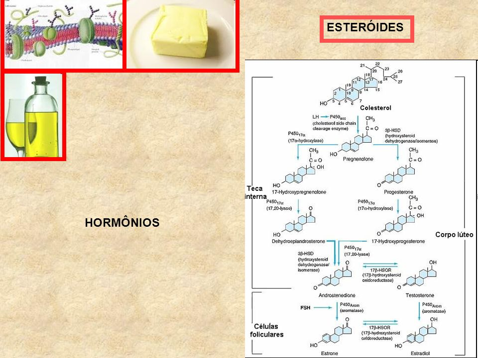 ESTERÓIDES HORMÔNIOS