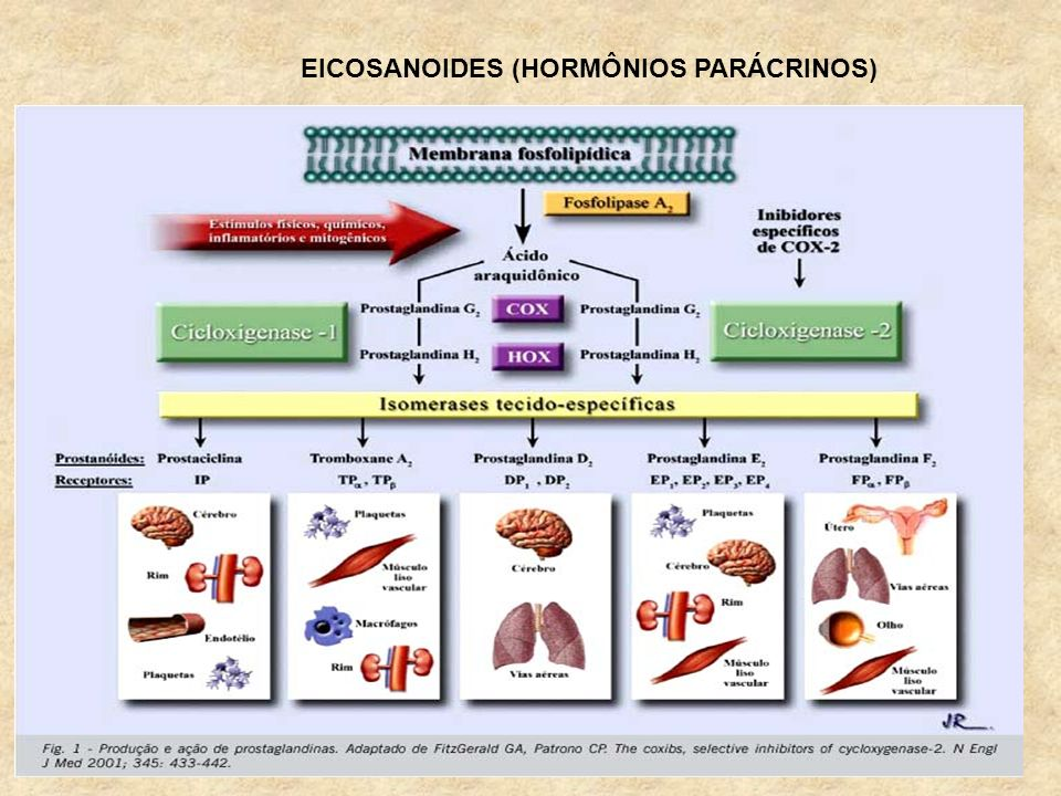 EICOSANOIDES (HORMÔNIOS PARÁCRINOS)