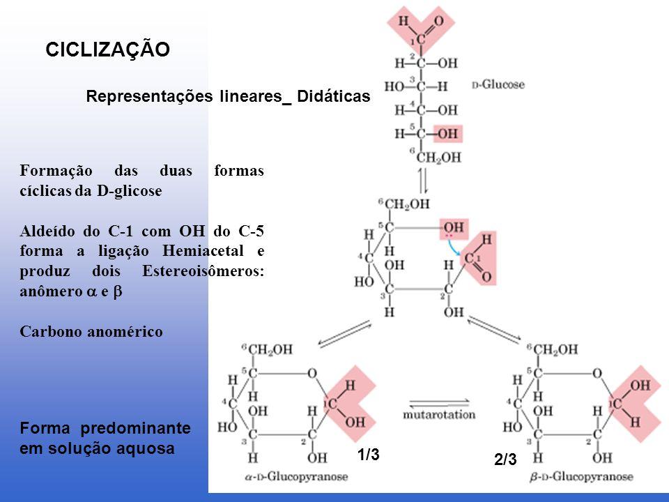CICLIZAÇÃO Representações lineares_ Didáticas
