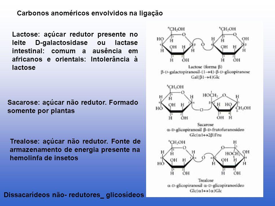 Carbonos anoméricos envolvidos na ligação