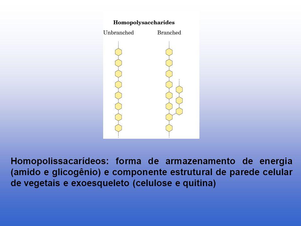 Homopolissacarídeos: forma de armazenamento de energia (amido e glicogênio) e componente estrutural de parede celular de vegetais e exoesqueleto (celulose e quitina)