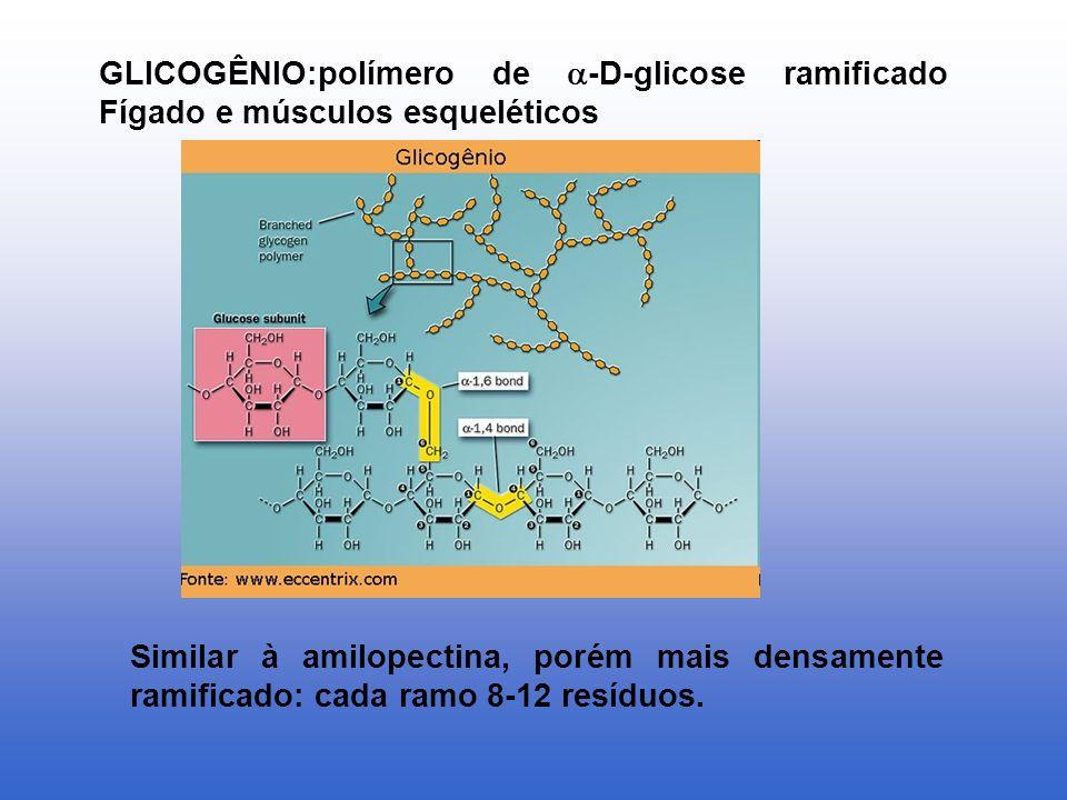 GLICOGÊNIO:polímero de -D-glicose ramificado Fígado e músculos esqueléticos