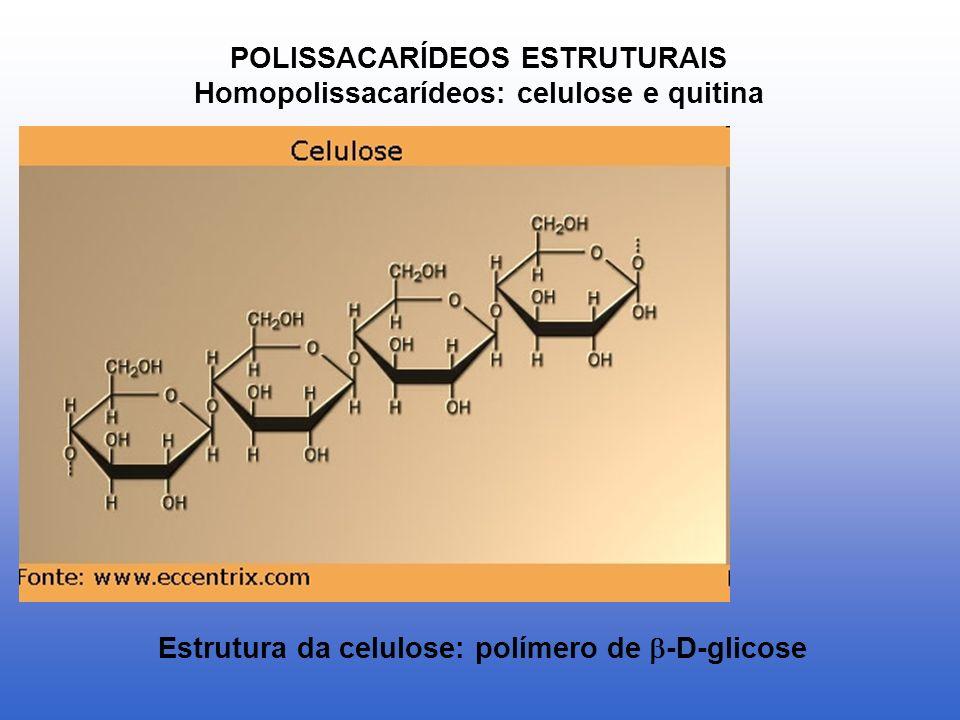 POLISSACARÍDEOS ESTRUTURAIS Homopolissacarídeos: celulose e quitina