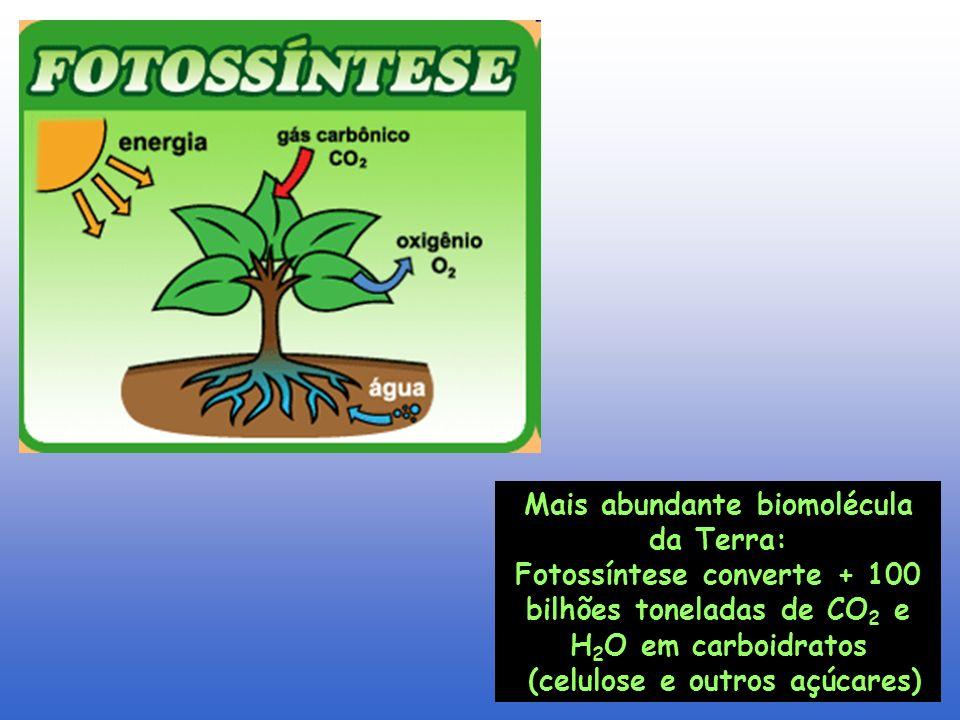 Mais abundante biomolécula da Terra: (celulose e outros açúcares)