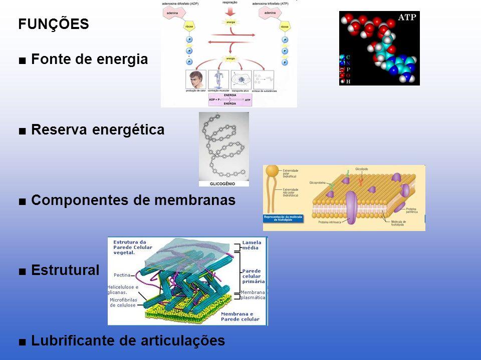 FUNÇÕES ■ Fonte de energia. ■ Reserva energética.