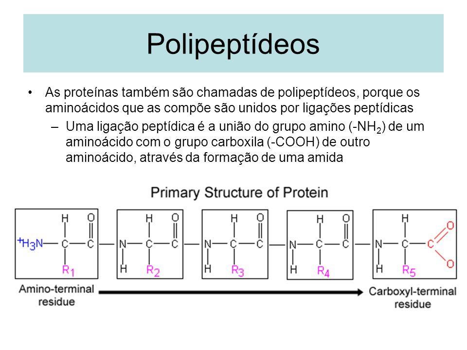 Polipeptídeos As proteínas também são chamadas de polipeptídeos, porque os aminoácidos que as compõe são unidos por ligações peptídicas.