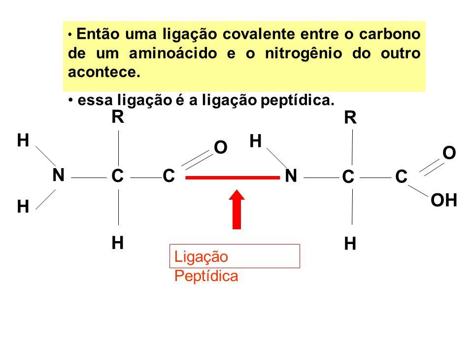 R R H H O O N C C N C C OH H H H essa ligação é a ligação peptídica.