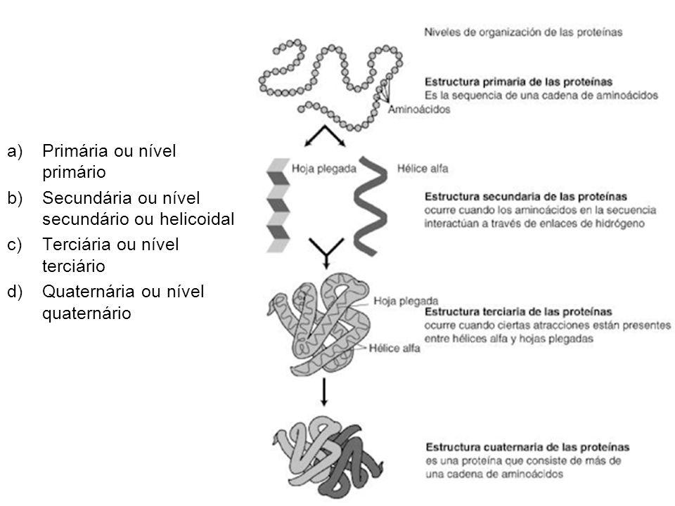 Estrutura Primária ou nível primário