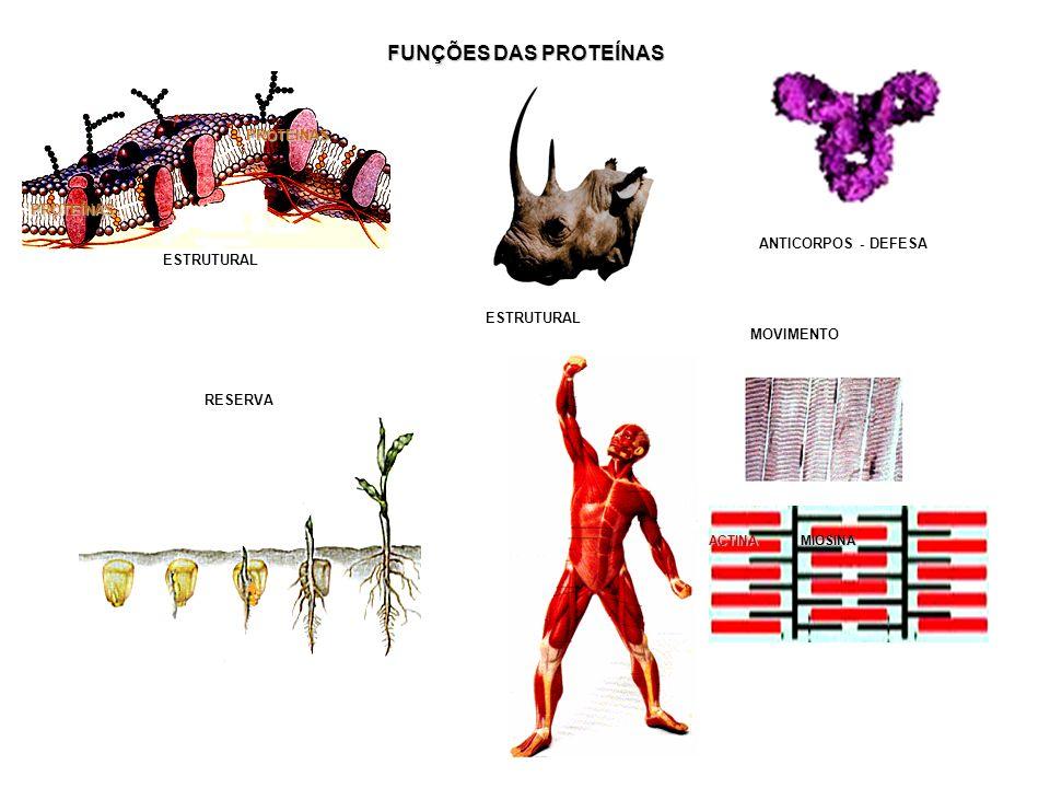 FUNÇÕES DAS PROTEÍNAS PROTEÍNAS PROTEÍNAS ANTICORPOS - DEFESA