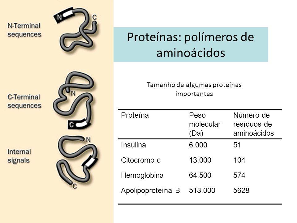 Proteínas: polímeros de aminoácidos