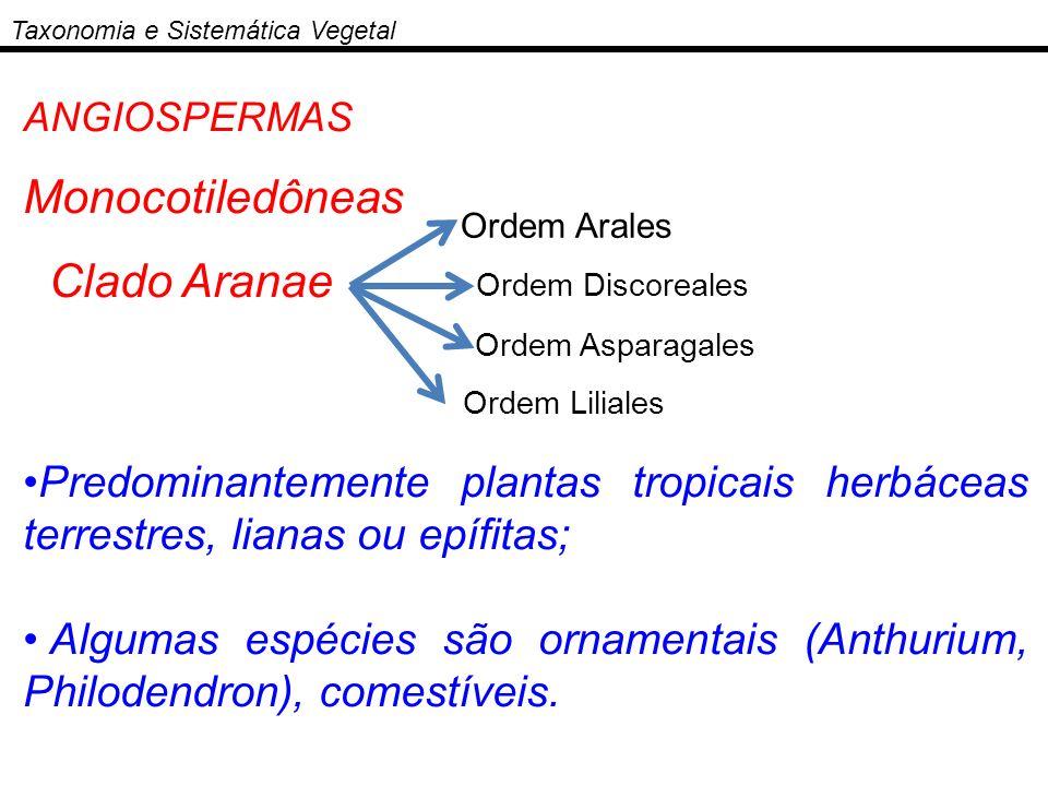 Monocotiledôneas Clado Aranae