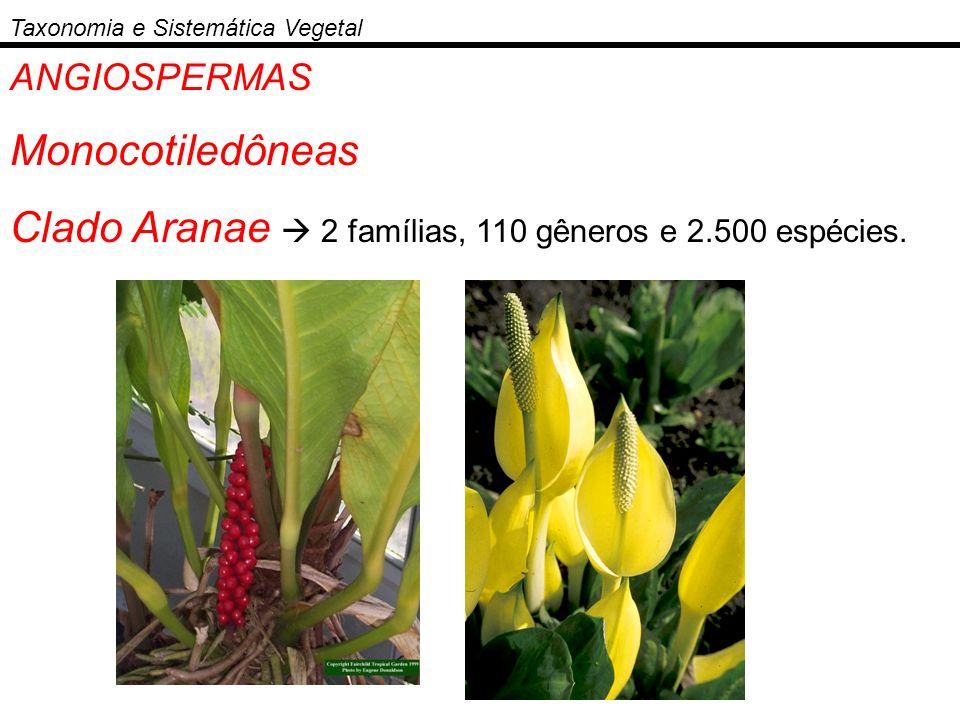 Clado Aranae  2 famílias, 110 gêneros e 2.500 espécies.