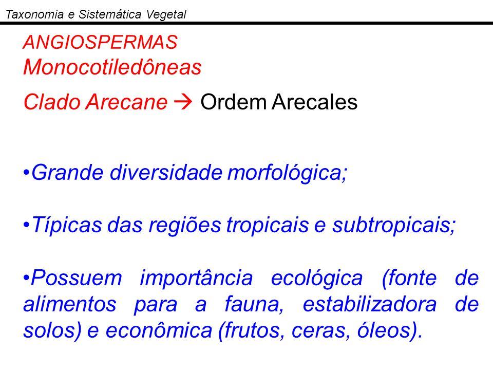 Clado Arecane  Ordem Arecales