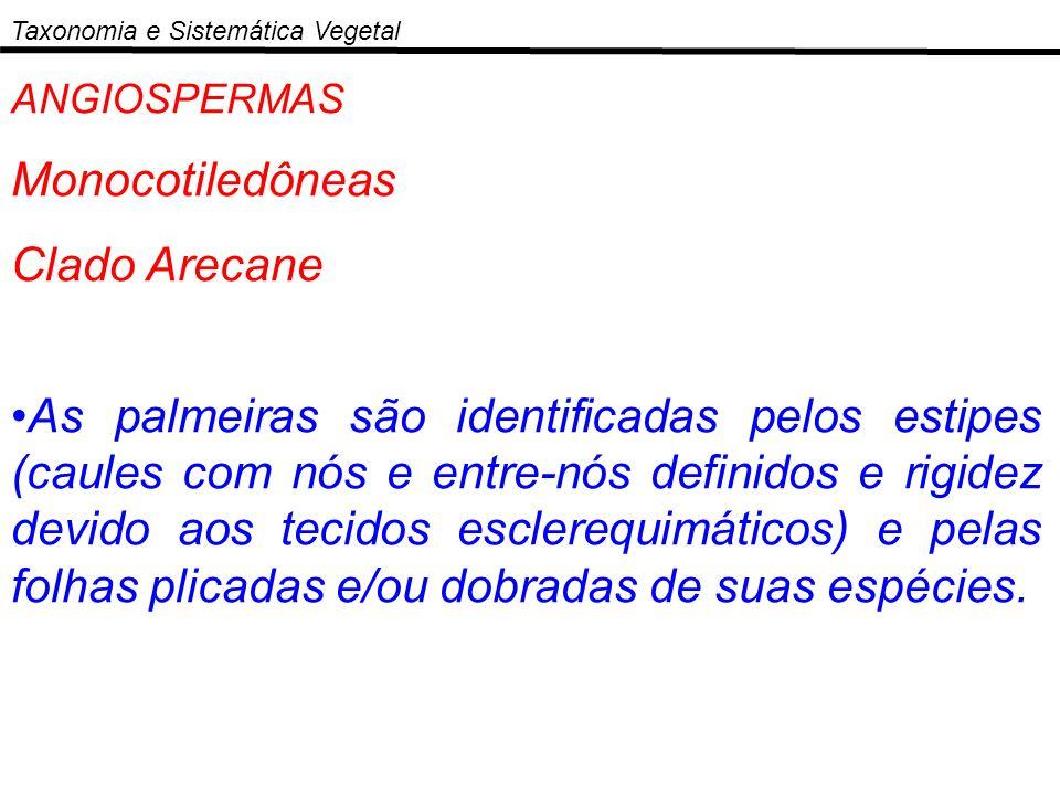 Monocotiledôneas Clado Arecane