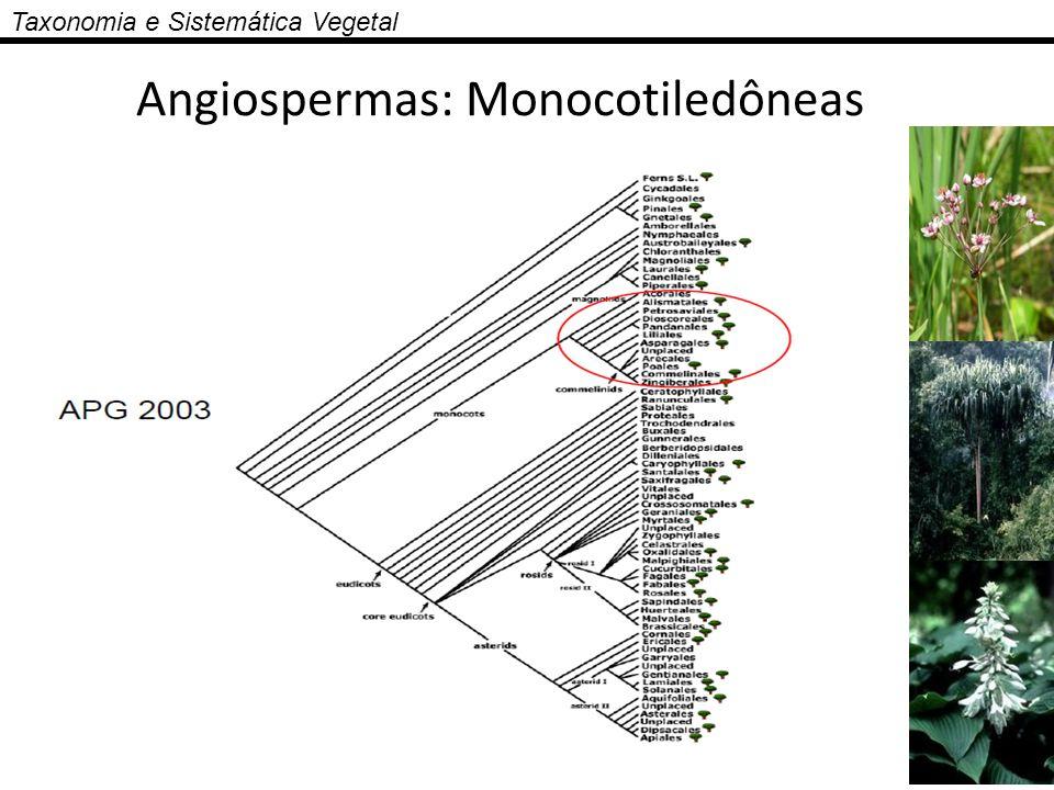 Angiospermas: Monocotiledôneas