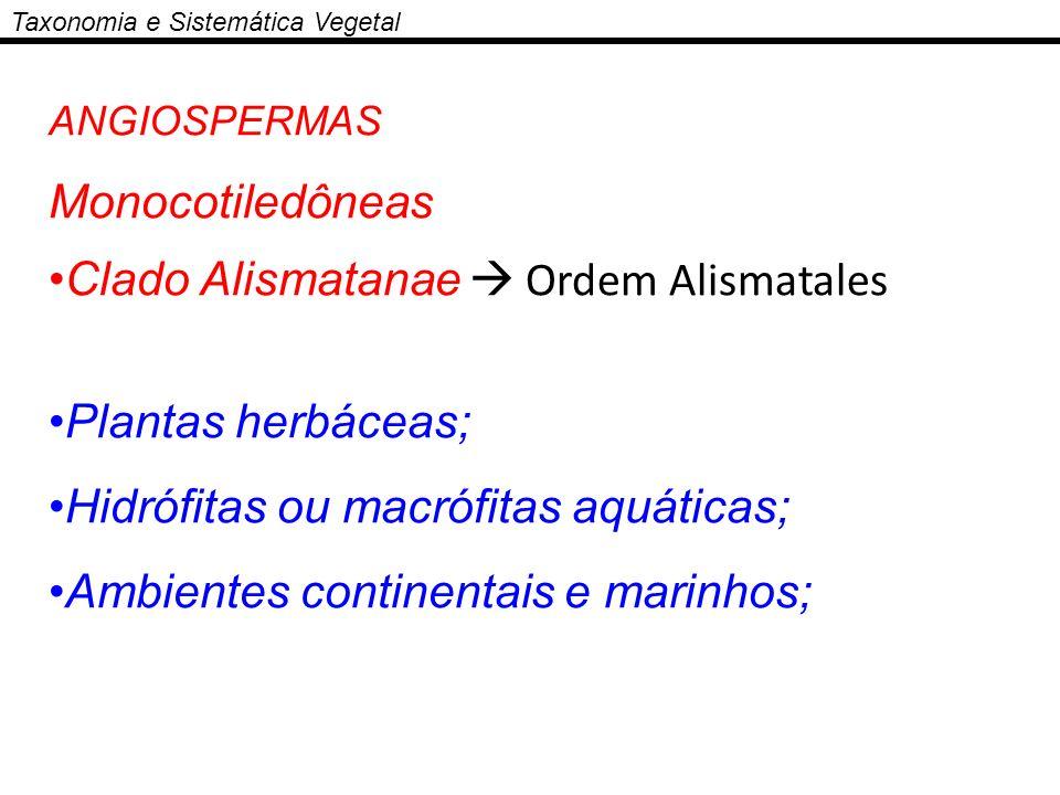 Clado Alismatanae  Ordem Alismatales Plantas herbáceas;