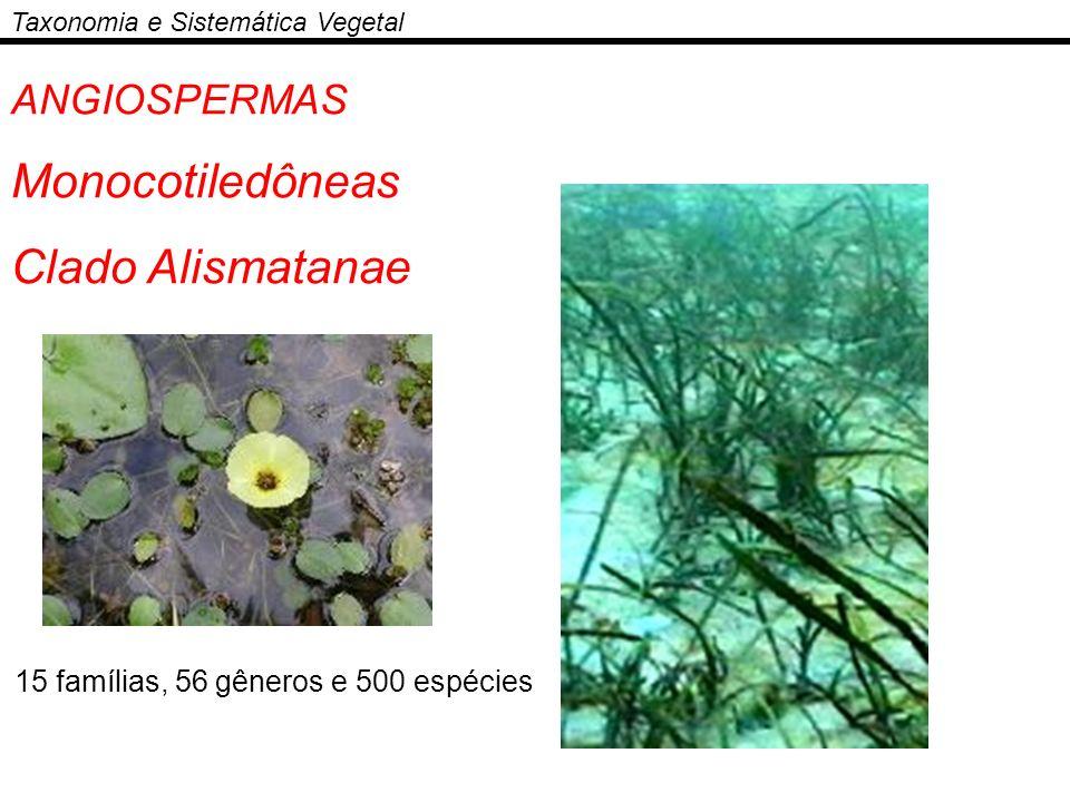 Monocotiledôneas Clado Alismatanae ANGIOSPERMAS