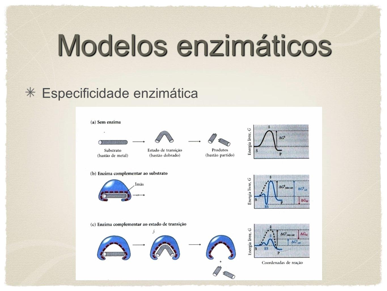 Modelos enzimáticos Especificidade enzimática