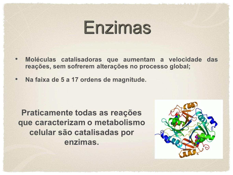 Enzimas Moléculas catalisadoras que aumentam a velocidade das reações, sem sofrerem alterações no processo global;