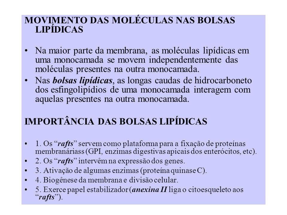 MOVIMENTO DAS MOLÉCULAS NAS BOLSAS LIPÍDICAS