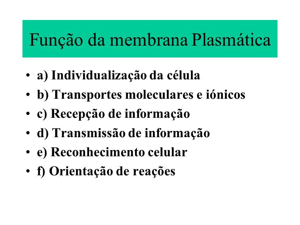 Função da membrana Plasmática