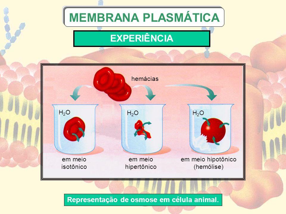 Representação de osmose em célula animal.