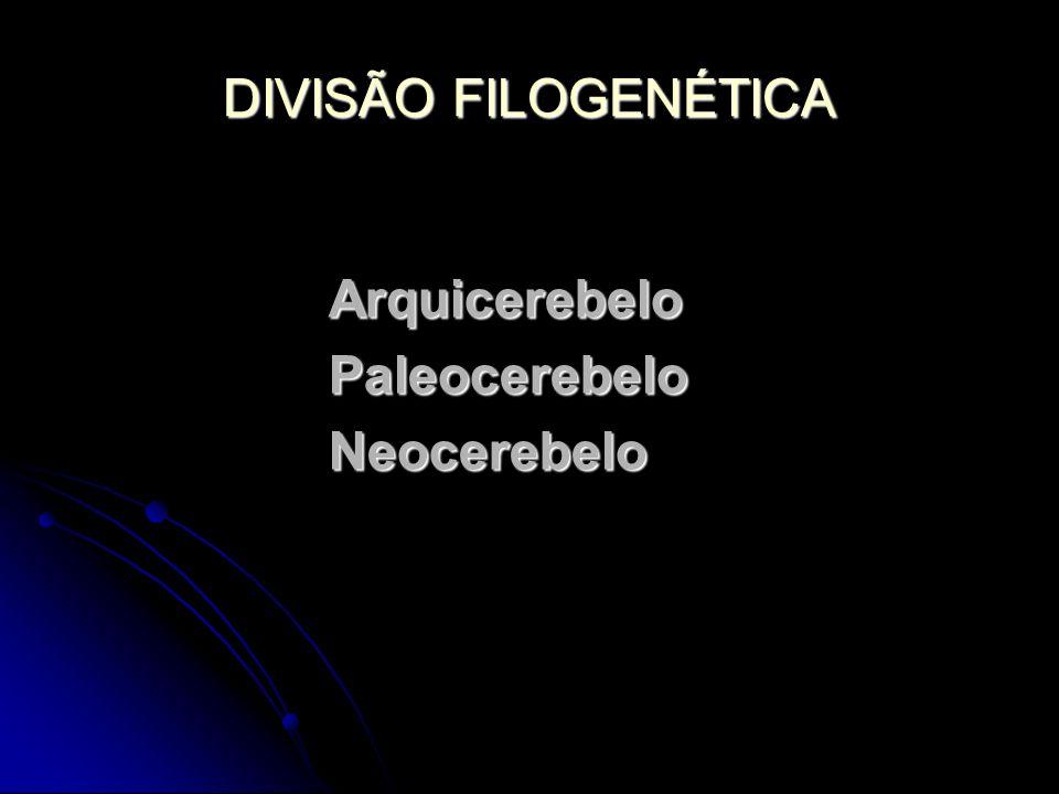 DIVISÃO FILOGENÉTICA Arquicerebelo Paleocerebelo Neocerebelo