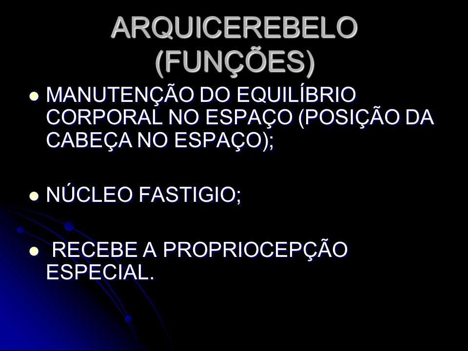 ARQUICEREBELO (FUNÇÕES)