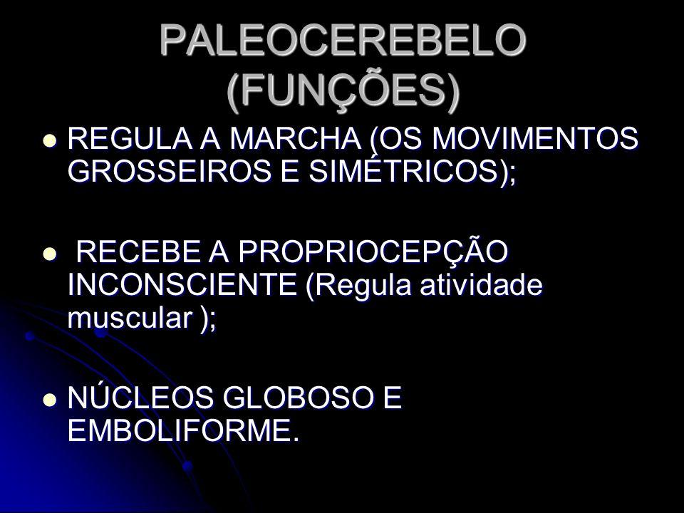 PALEOCEREBELO (FUNÇÕES)