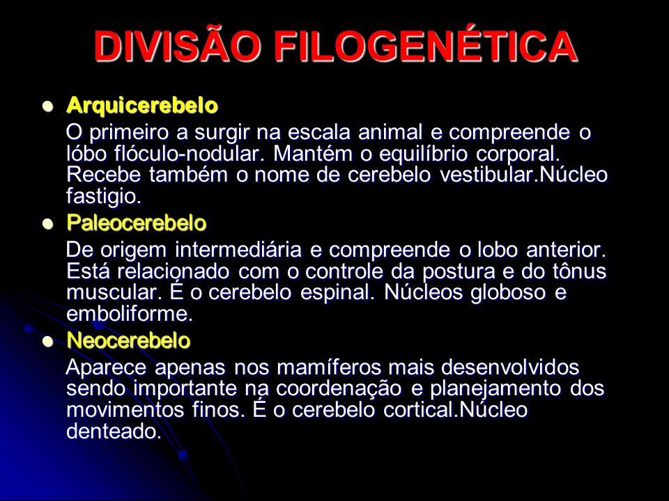 DIVISÃO FILOGENÉTICA Arquicerebelo
