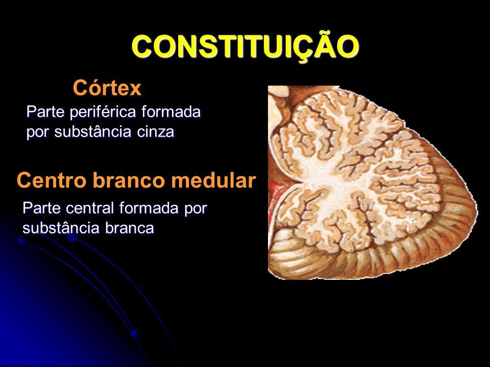 CONSTITUIÇÃO Córtex Centro branco medular