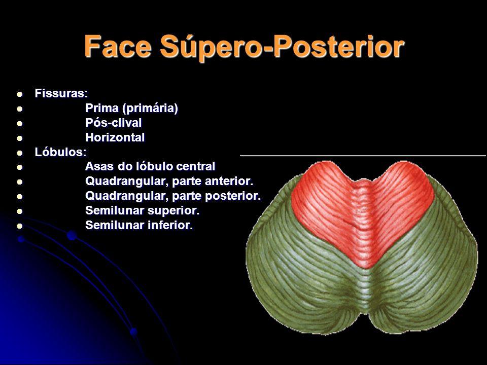 Face Súpero-Posterior