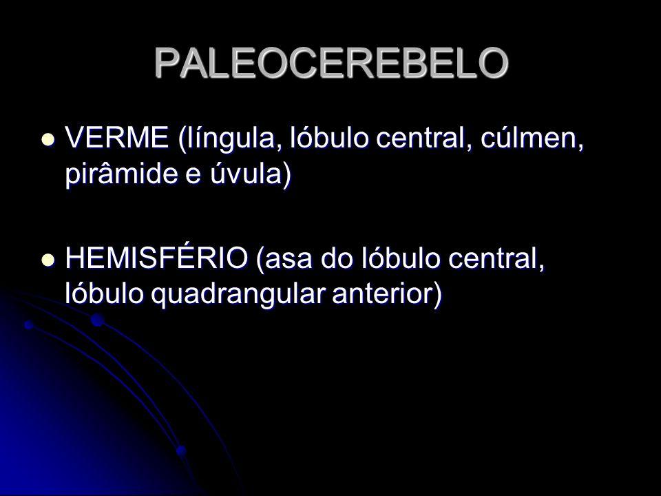 PALEOCEREBELO VERME (língula, lóbulo central, cúlmen, pirâmide e úvula) HEMISFÉRIO (asa do lóbulo central, lóbulo quadrangular anterior)