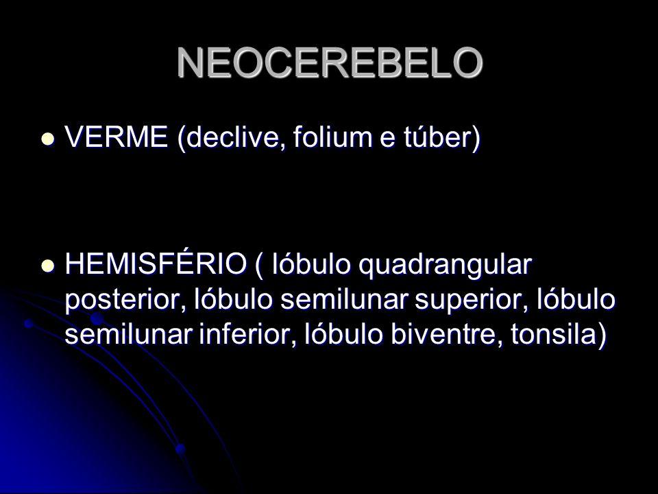 NEOCEREBELO VERME (declive, folium e túber)