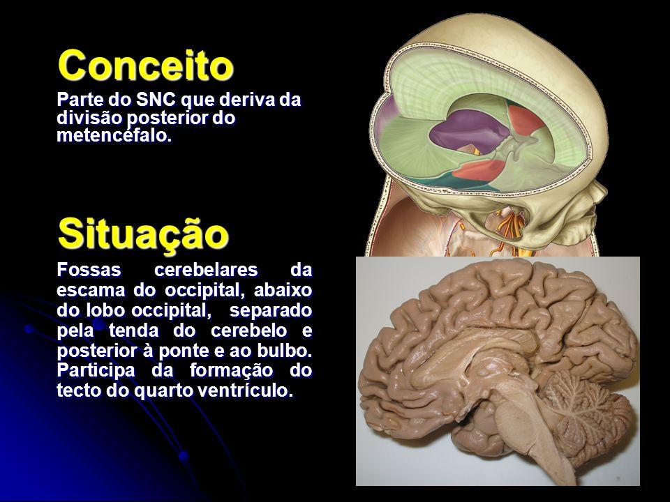 Conceito Parte do SNC que deriva da divisão posterior do metencéfalo. Situação.
