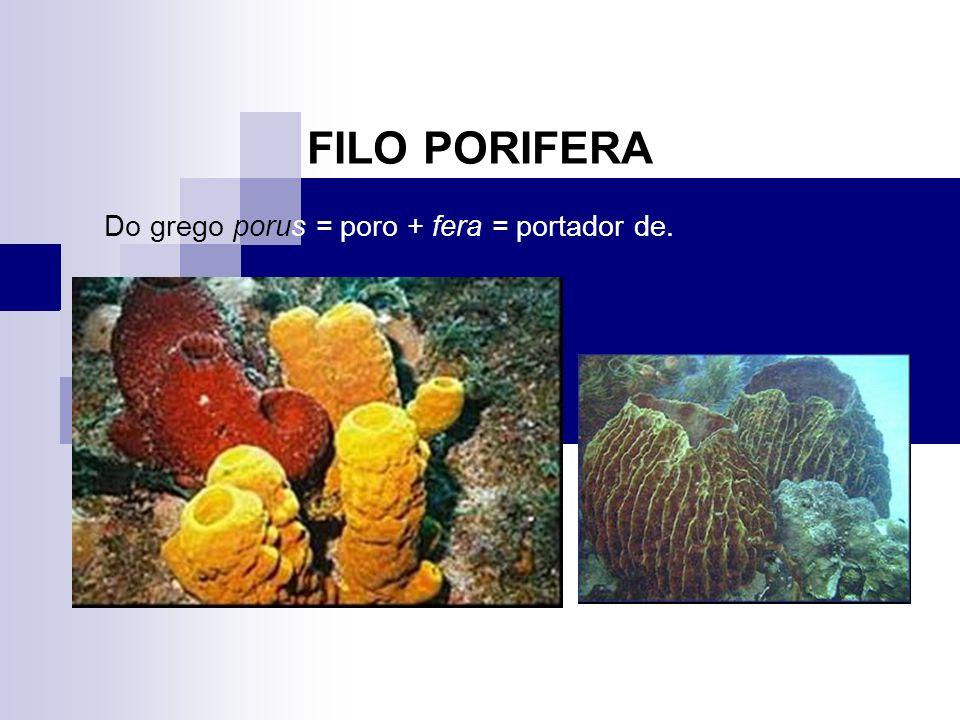 FILO PORIFERA Do grego porus = poro + fera = portador de.