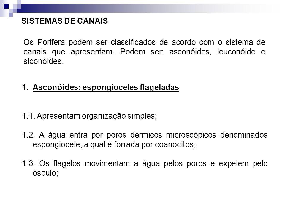 SISTEMAS DE CANAIS