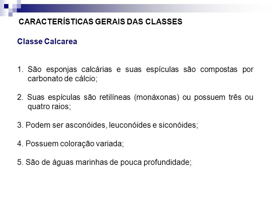 CARACTERÍSTICAS GERAIS DAS CLASSES