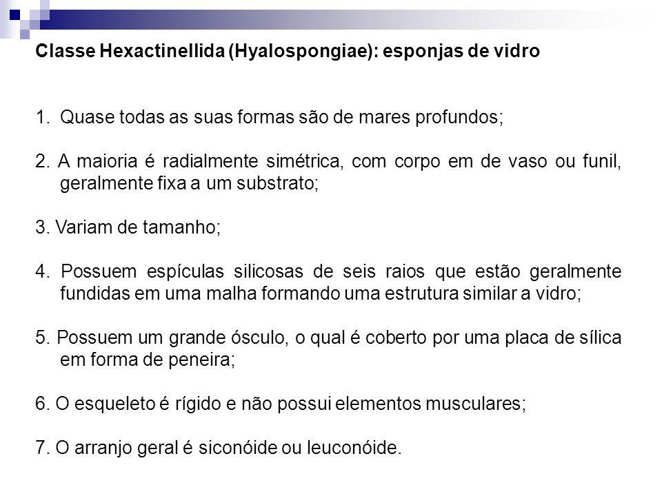 Classe Hexactinellida (Hyalospongiae): esponjas de vidro
