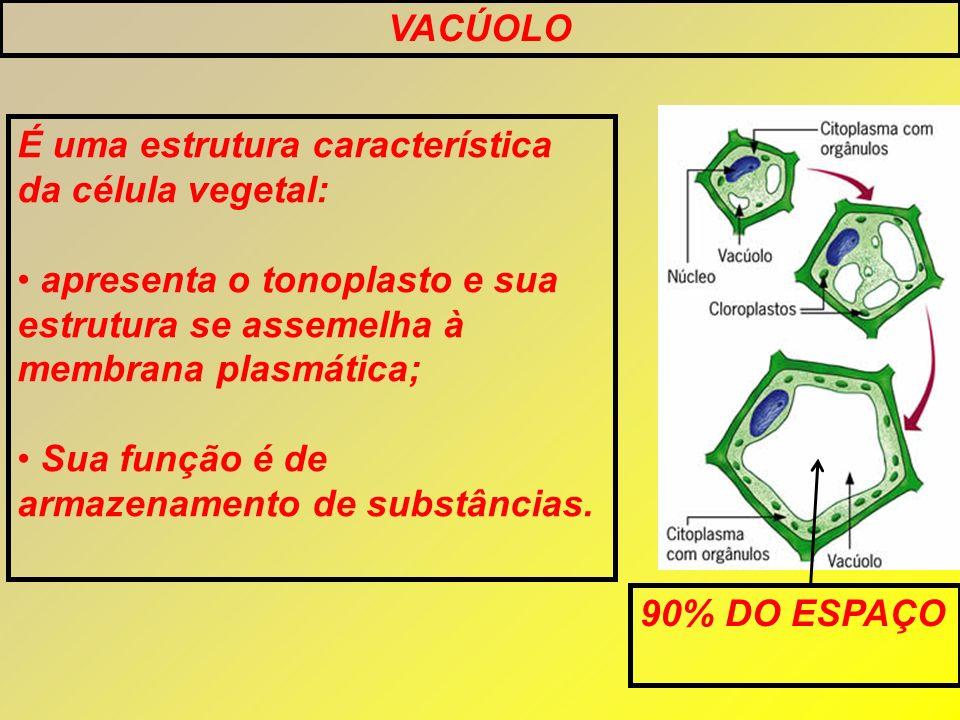 VACÚOLO É uma estrutura característica da célula vegetal: apresenta o tonoplasto e sua estrutura se assemelha à membrana plasmática;