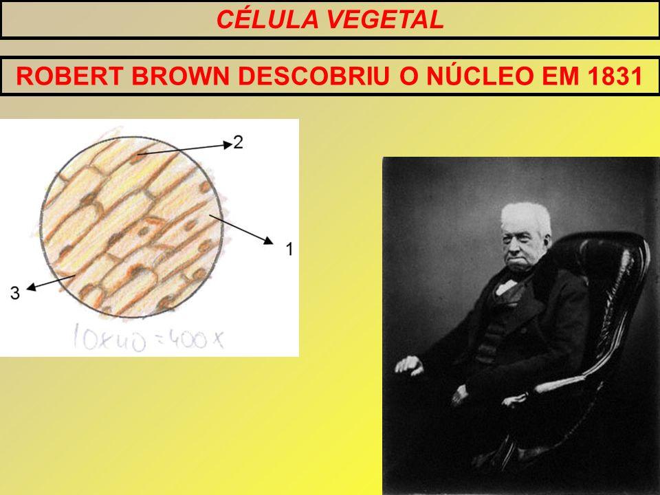 ROBERT BROWN DESCOBRIU O NÚCLEO EM 1831