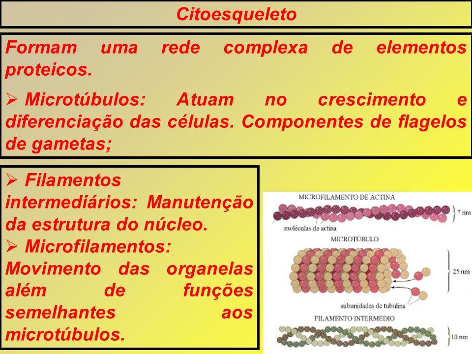 Citoesqueleto Formam uma rede complexa de elementos proteicos.