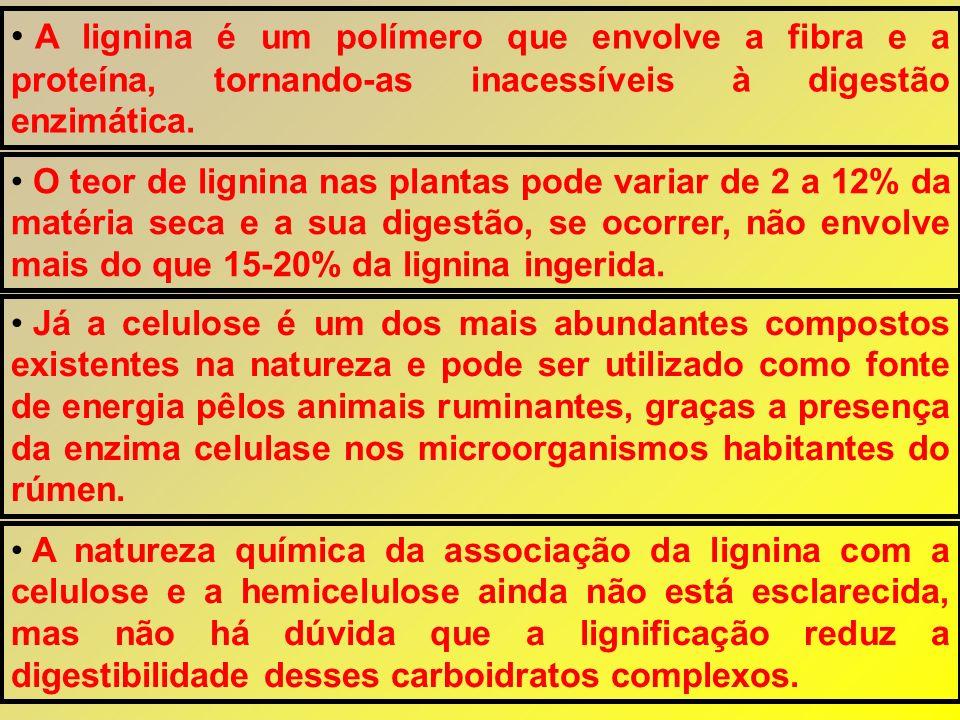 A lignina é um polímero que envolve a fibra e a proteína, tornando-as inacessíveis à digestão enzimática.