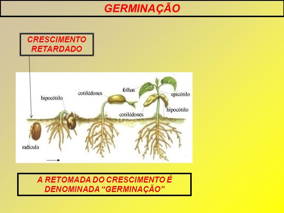 GERMINAÇÃO CRESCIMENTO RETARDADO