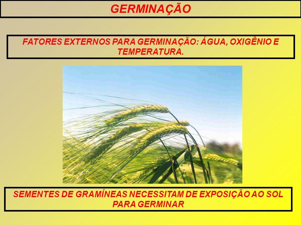 GERMINAÇÃO FATORES EXTERNOS PARA GERMINAÇÃO: ÁGUA, OXIGÊNIO E TEMPERATURA.