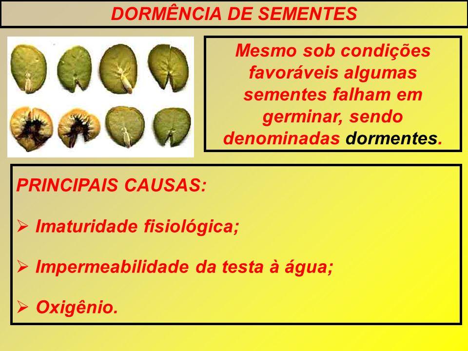 DORMÊNCIA DE SEMENTES Mesmo sob condições favoráveis algumas sementes falham em germinar, sendo denominadas dormentes.