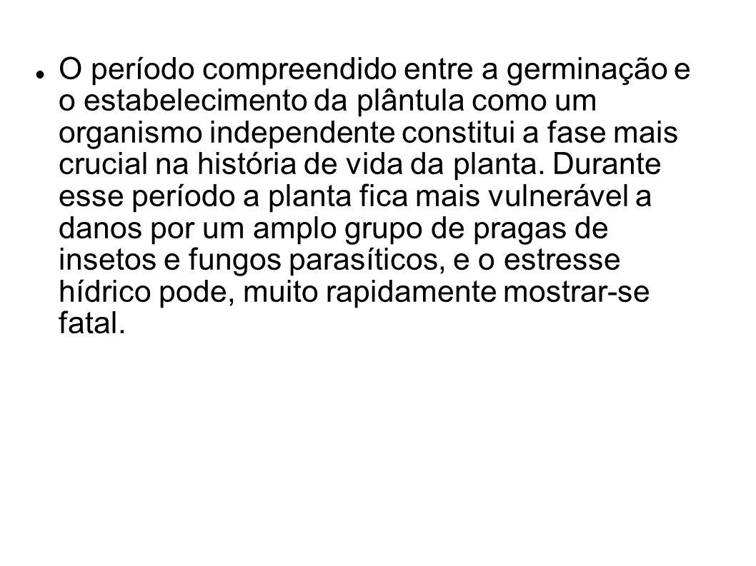 O período compreendido entre a germinação e o estabelecimento da plântula como um organismo independente constitui a fase mais crucial na história de vida da planta.